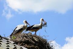 аисты гнездя их стоковая фотография rf