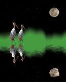 Аисты и отражение луны Стоковая Фотография