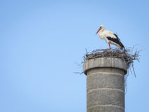 Аист аиста белого аиста в своем гнезде против голубого неба Стоковое фото RF
