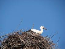 Аист в гнезде против голубого неба в Беларуси стоковое изображение