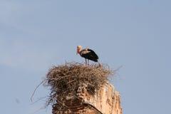 Аист в гнезде в Marrakech Стоковое Изображение