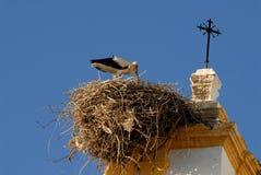 Аист в своем гнезде в Кадисе в Испании Стоковые Изображения