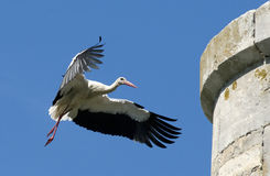 аист гнездя летания к стоковые фото