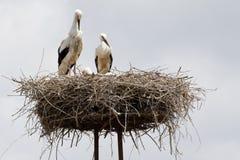 аист гнездя Стоковая Фотография RF