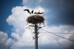 аист гнездя s Стоковая Фотография RF