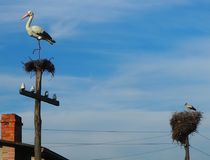 Аист голубого неба сделал гнездо и рядом с планом аиста Стоковые Изображения RF