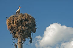 Аист на гнезде аиста Стоковая Фотография