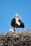 Аист на гнезде с младенцем Стоковые Изображения