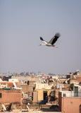Аист над крышами Marrakech Стоковая Фотография RF