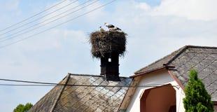 Аист на печных трубах старого здания Стоковое фото RF