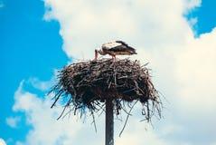 Аист сидя в гнезде около крыши Стоковая Фотография RF