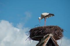 Аист стоя в гнезде на крыше на backg голубого неба Стоковая Фотография RF