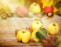 Айвы - плодоовощ осени Стоковая Фотография