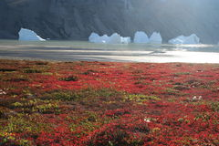 айсберги Гренландии  Стоковые Фотографии RF