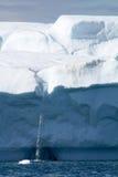 Айсберг в Гренландии Стоковое Фото