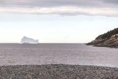 Айсберг и 2 чайки Стоковая Фотография