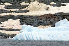 Айсберг перед колонией пингвина Антарктики Стоковое Изображение RF