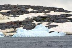 Айсберг перед колонией пингвина Антарктики Стоковая Фотография