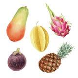 Акварель вычерченного brigt руки красочная установила тропических плодов изолированный иллюстрация вектора