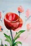 акварель мака цветка Стоковые Изображения