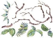 Акварель установила ветвей и листьев, естественного ботанического элемента иллюстрация вектора