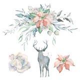 Акварель установила с букетом и оленями Poinsettia стоковые фото