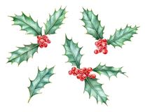 Акварель установила ягоды падуба, символа рождества и Нового Года иллюстрация вектора