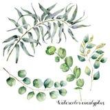 Акварель установленная с ветвью евкалипта Рука покрасили флористическую иллюстрацию с листьями и ветвями осемененный и серебряное Стоковые Изображения RF