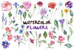 Акварель цветет иллюстрация Стоковое Изображение RF