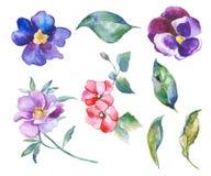 Акварель цветет иллюстрация Стоковая Фотография RF