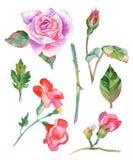 Акварель цветет иллюстрация Стоковые Фото
