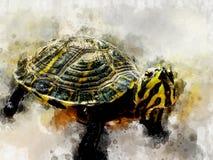 Акварель черной желтой изолированной черепахи стоковые фотографии rf