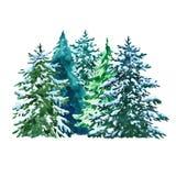 Акварель evegreen иллюстрация сосен со снегом, изолированным на белой предпосылке над зимой валов снежка съемки ландшафта пущи бесплатная иллюстрация