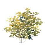 акварель shrub стоковые фотографии rf