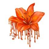 Акварель вектора лилии покрашенная иллюстрацией Стоковое Изображение