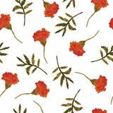 Акварель, вектор, безшовный цветочный узор с ноготками Стоковые Изображения