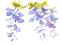 Акварель ветви глицинии цветет покрашенная рука иллюстрации Стоковая Фотография RF