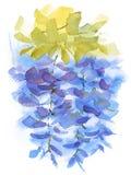 Акварель ветви глицинии цветет покрашенная рука иллюстрации Стоковое фото RF