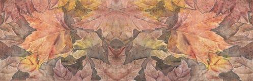 Акварель лист осени Стоковые Изображения RF