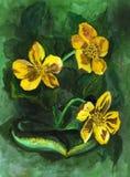 Акварель, крася цветки Стоковая Фотография