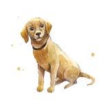 Акварель Лабрадор Рука рисуя щенка Лабрадора Усаженный унылый d Стоковые Фотографии RF