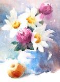 Акварель маргариток цветет покрашенная рука иллюстрации Стоковые Фото
