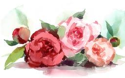 Акварель пионов цветет покрашенная рука иллюстрации Стоковое фото RF