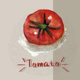 Акварель покрашенная томатом Стоковое Фото