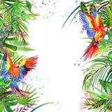 Акварель попугая леса тропической акварели леса тропическая бесплатная иллюстрация