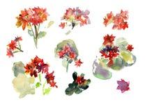 Акварель рисуя яркие красные цветки Стоковая Фотография