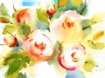 Акварель роз сада цветет покрашенная рука иллюстрации Стоковые Фотографии RF