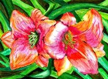 Акварель цветет лилии крася часть впечатления Стоковое Изображение RF