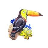 Акварель toucan Стоковое Фото