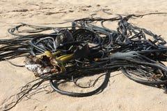 Аквариумное растени на пляже Стоковая Фотография
